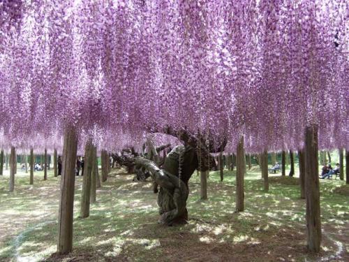 藤花仿真树