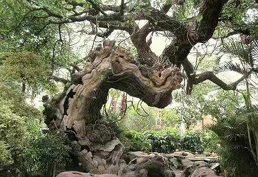 仿真熱帶樹