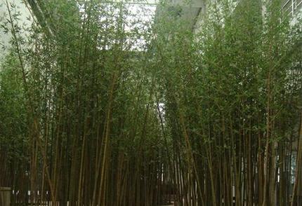 人造仿真竹子