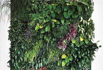 垂直绿化墙,打造自然生态墙体装饰