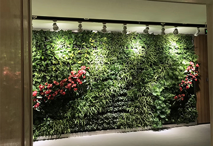 室內景觀植物墻