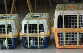 火車寵物托運收費標準是什么呢