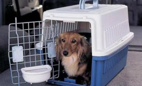 關于寵物托運的注意事項有哪些