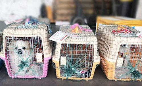 沈阳宠物托运公司告诉大家托运公司是如何保护宠物