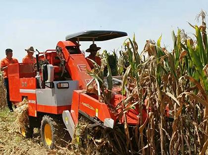 巨明2行玉米收获机