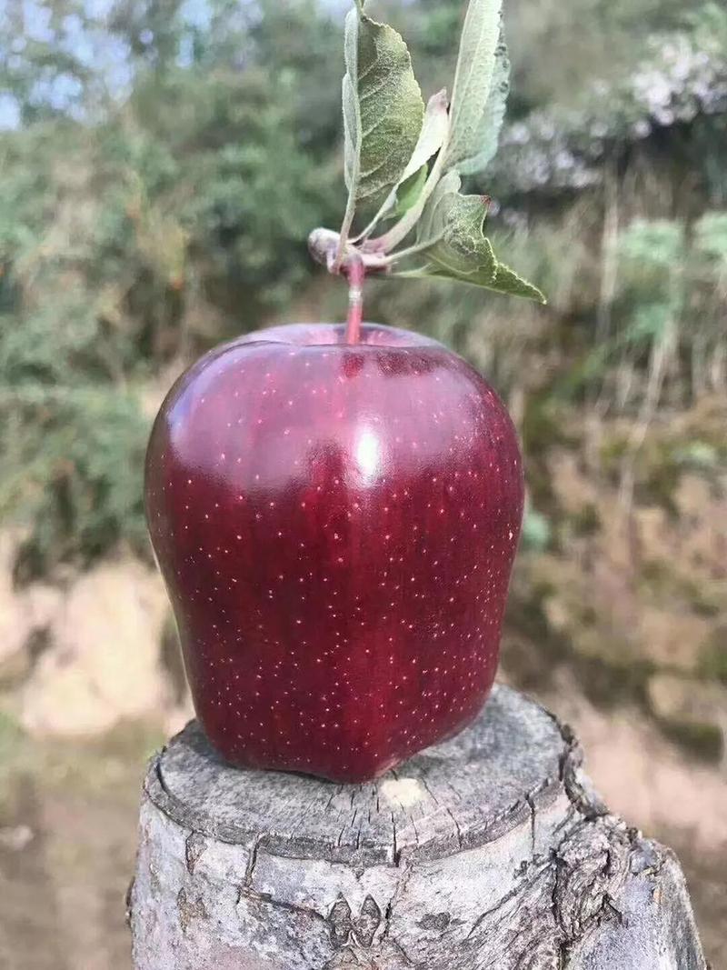 在天水,不是所有的花牛苹果都叫潘苹果