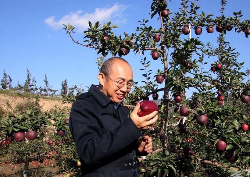 潘石屹先生在潘苹果基地采风,大力称赞苹果好吃还是花牛苹果,吃不够!