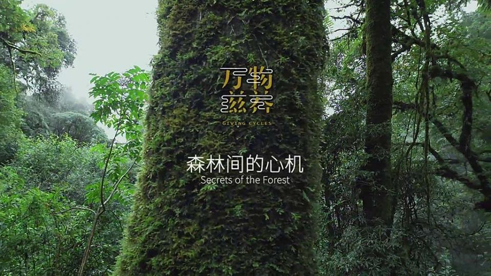 纪录片《万物滋养--森林间的心机》
