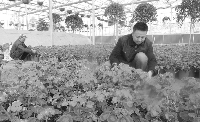 绿丰源农业公司