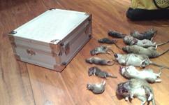沈阳老鼠消杀