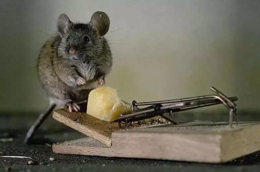 沈阳粘鼠板公司告