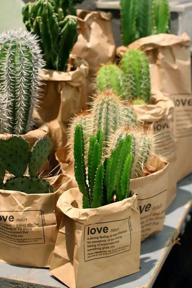 室内植物租摆价格