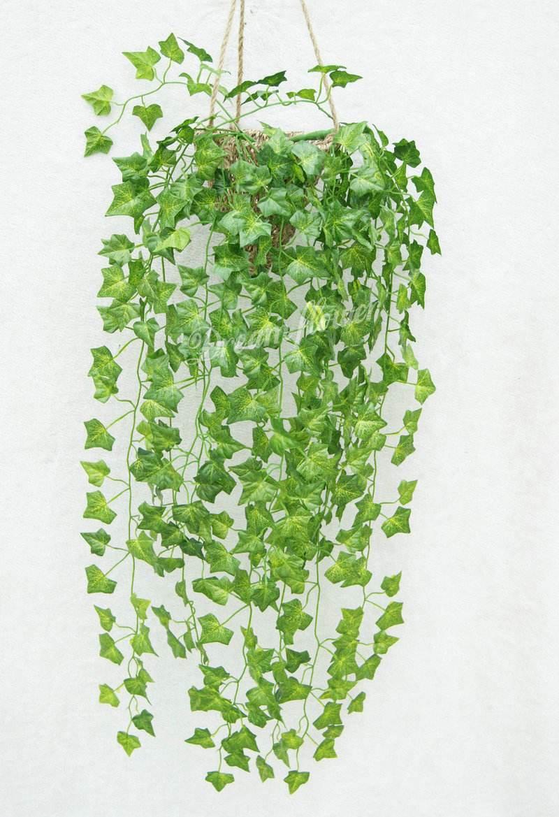室内植物吊篮