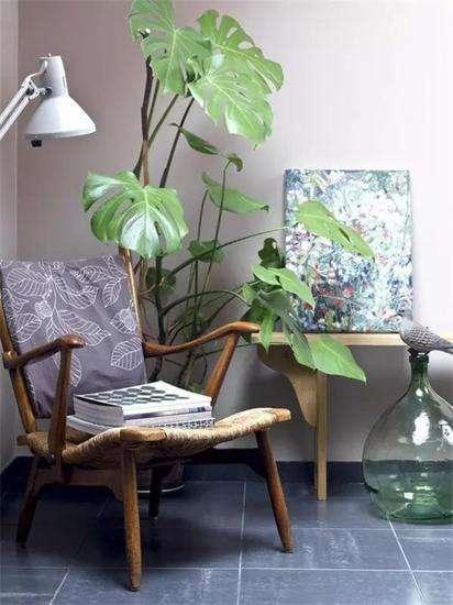 植物租摆-龟背竹