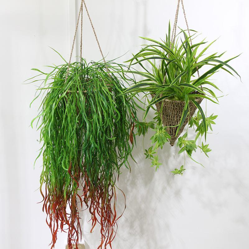 盆栽出租-室內吊籃