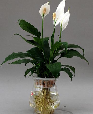 昆明植物租摆价格