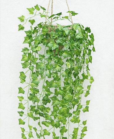 辦公綠植租賃-吊籃