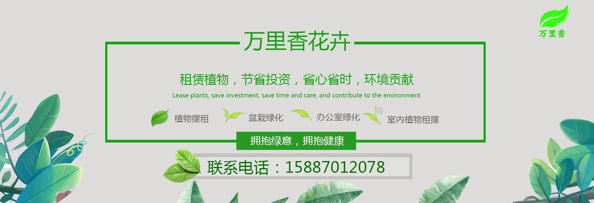 昆明绿植租赁公司