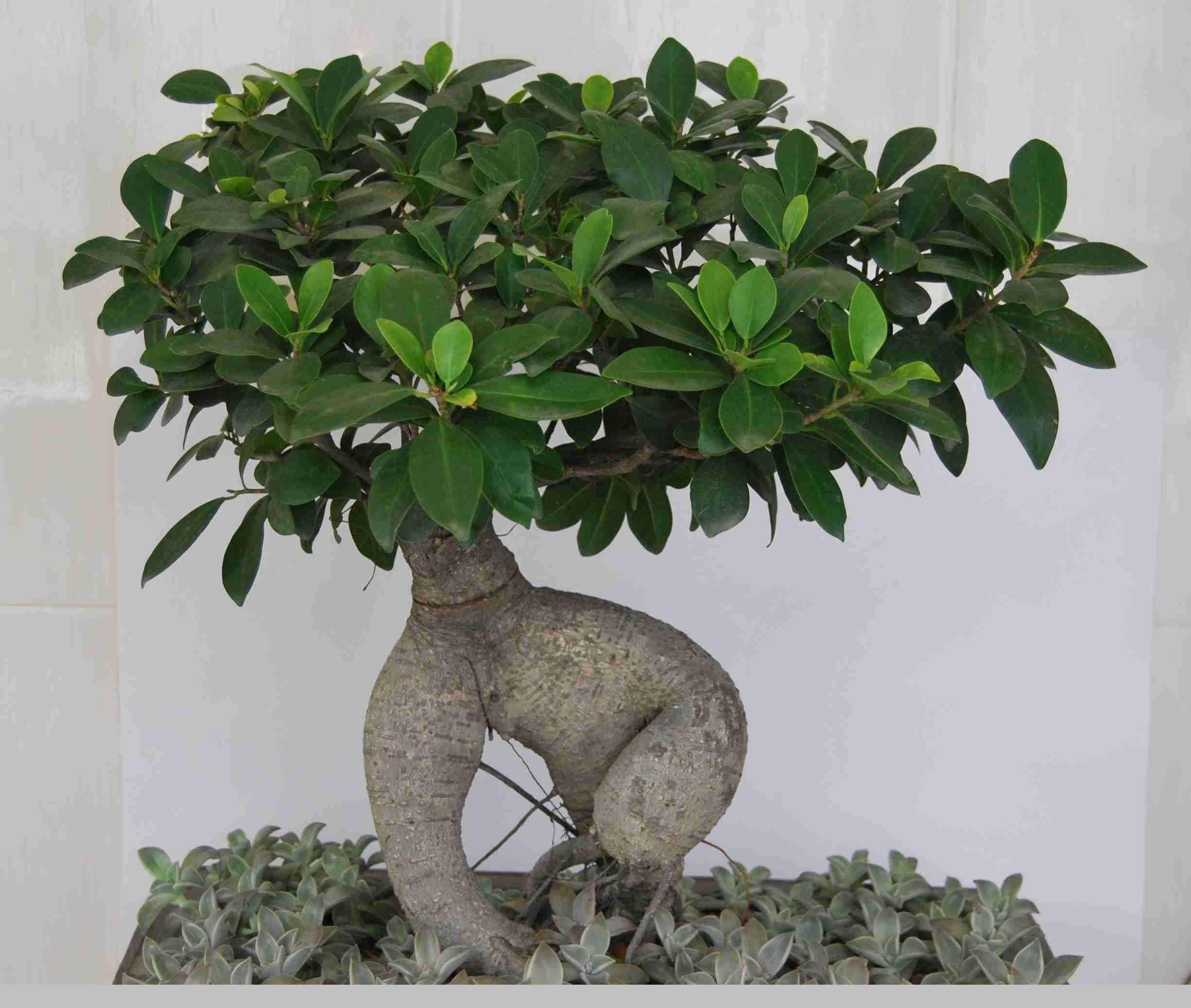 昆明植物租赁