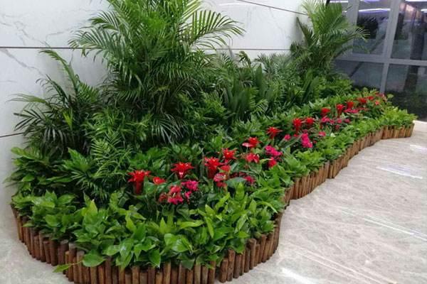昆明办公室植物租擺为大家带来一期綠植租擺选取类型上的原装与功能介绍