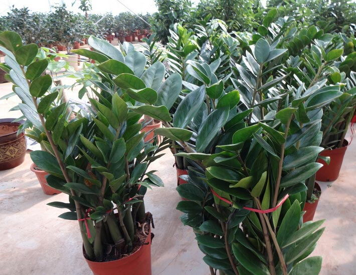云南植物出租公司