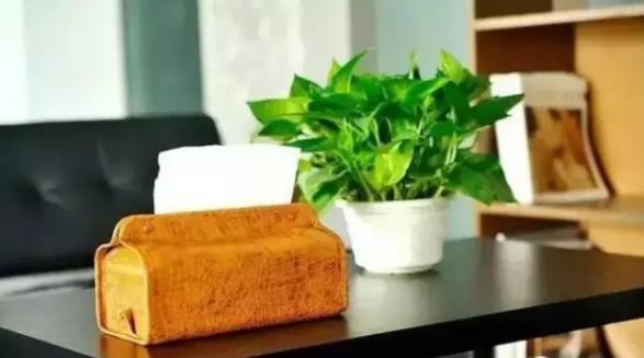 花卉出租,让办公室绿化从此省心无忧