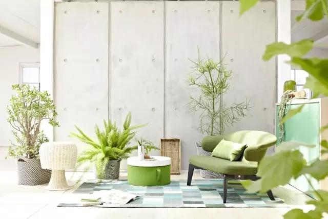 新家适合摆放的8种盆栽绿植,你家养了几种呢?