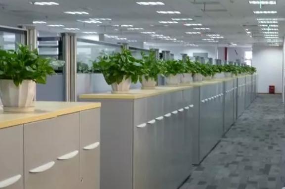 辦公室裝修裝飾,綠植盆栽租賃必不可少,布置技巧了解一下