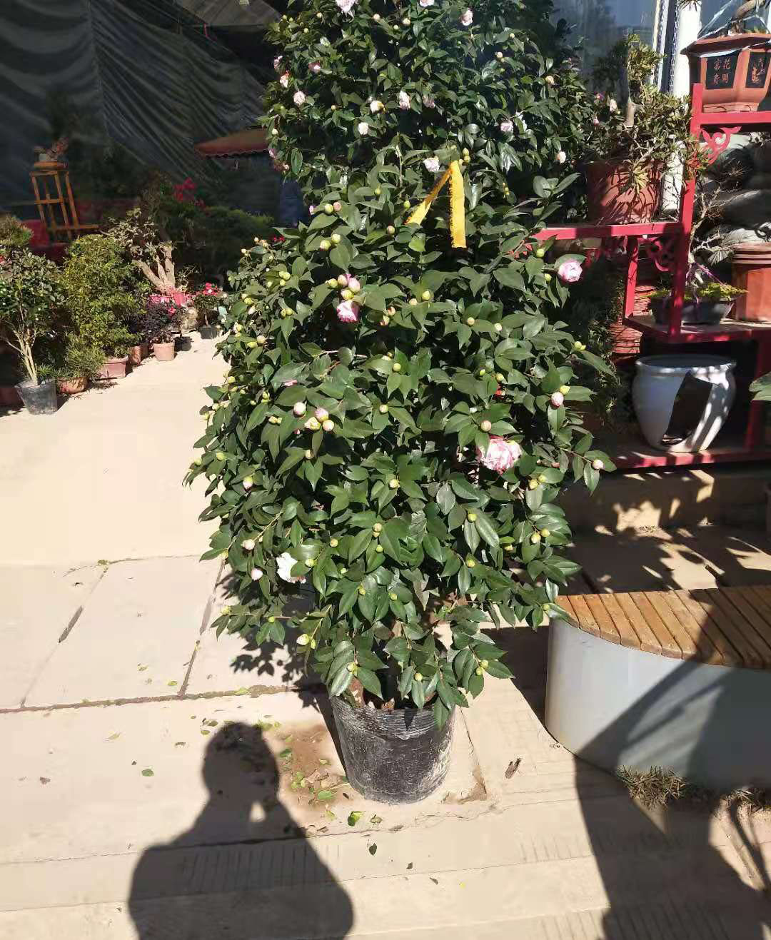 绿化植物出租案例