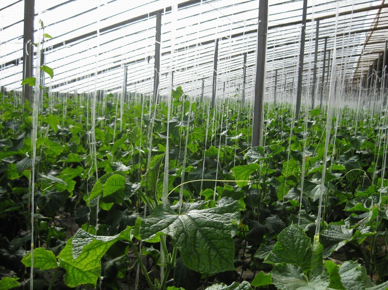蔬菜温室大棚厂