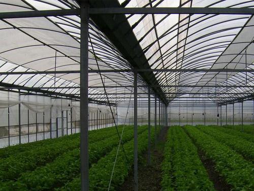 蔬菜温室大棚费用