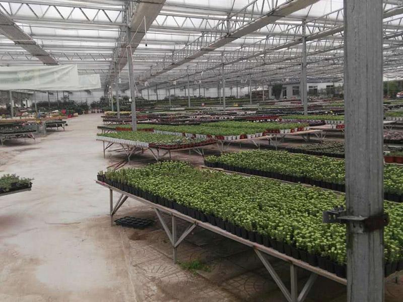 建设连栋玻璃蔬菜温室大棚需注意的细节分享