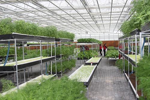 蔬菜温室大棚多少钱