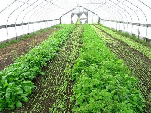 蔬菜温室大棚哪家好