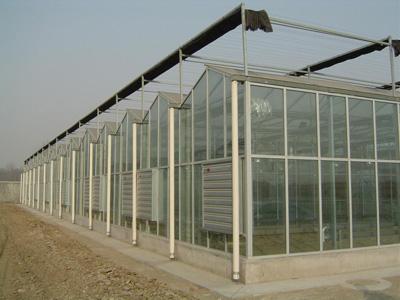 玻璃温室大棚价格