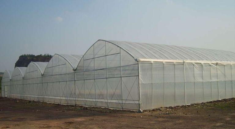 南寧/柳州塑料大棚蔬菜生產高溫天氣的應對措施