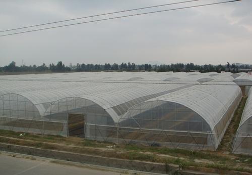 薄膜連棟溫室大棚造價