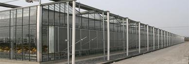 分享智能温室建设以专业的品质受到客户喜爱的原因有哪些