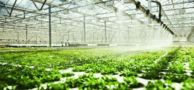 智能温室大棚如此受欢迎的原因—山东蔬菜温室大棚生产厂家