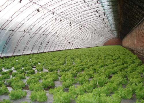 蔬菜大棚土壤酸化以及解决措施有哪些?