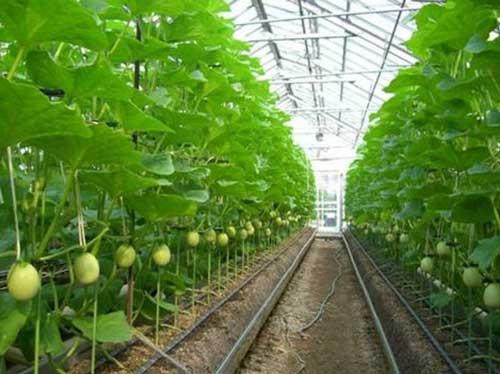 温室大棚建设中要覆盖遮阳网的作用有哪些