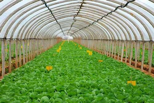 宝山柳州蔬菜大棚