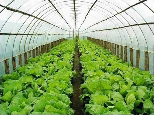 宝山梧州蔬菜大棚