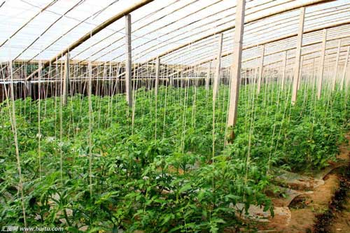 玉林蔬菜大棚
