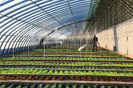 蔬菜大棚建设安装技巧注意事项有哪些?