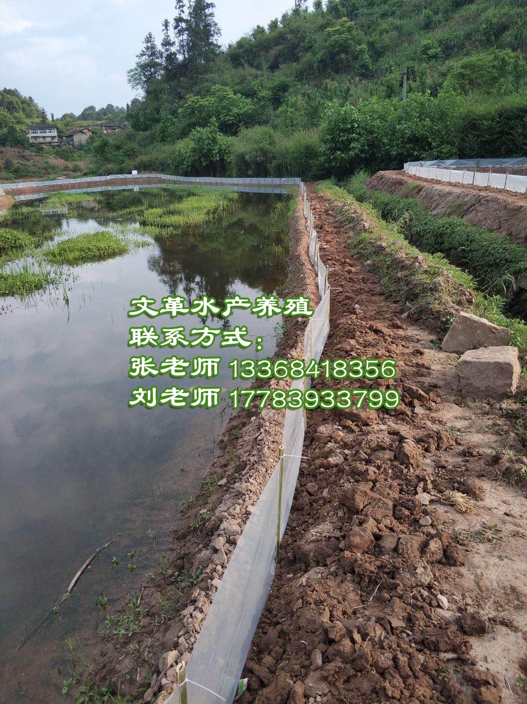 青蛙养殖基地