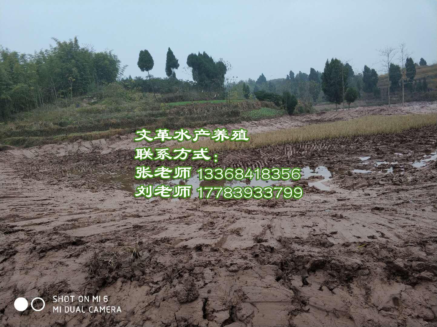 泥鳅养殖基地