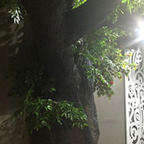 武汉垂直绿化公司