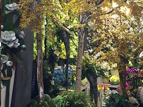 仿真树如何与自然环境协调共生