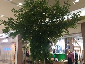 有哪些植物适合垂直绿化墙?